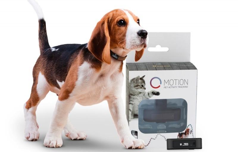 Tractive Motion ( tracker d'activités pour chien)