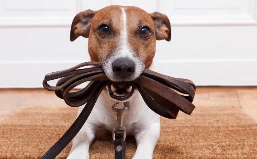À tous les pseudos-spécialistes canins, lisez etapprenez!