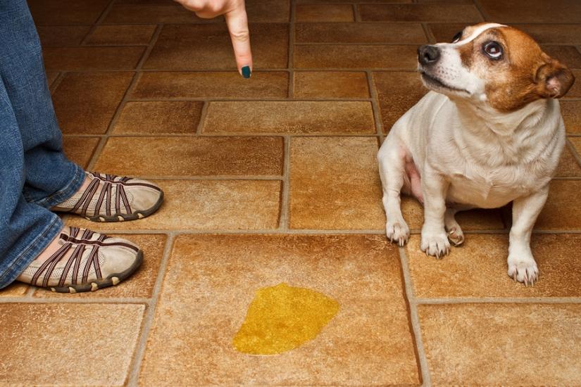 Mon chien n'est pas propre quoifaire?